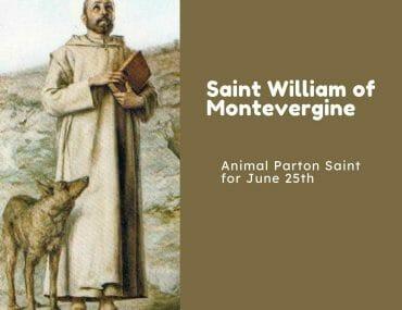 Saint William of Montevergine